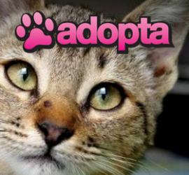 adopta-gdl.jpg
